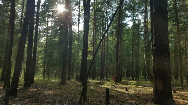 Курганцам опять запретили посещать леса