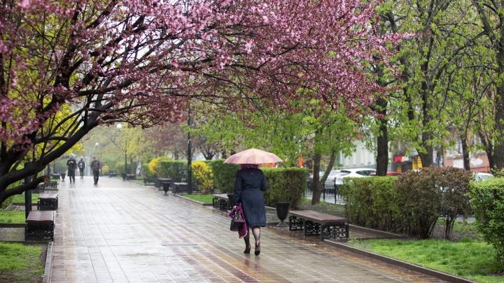 Снова тучи: какая погода ждет ростовчан в первую неделю лета