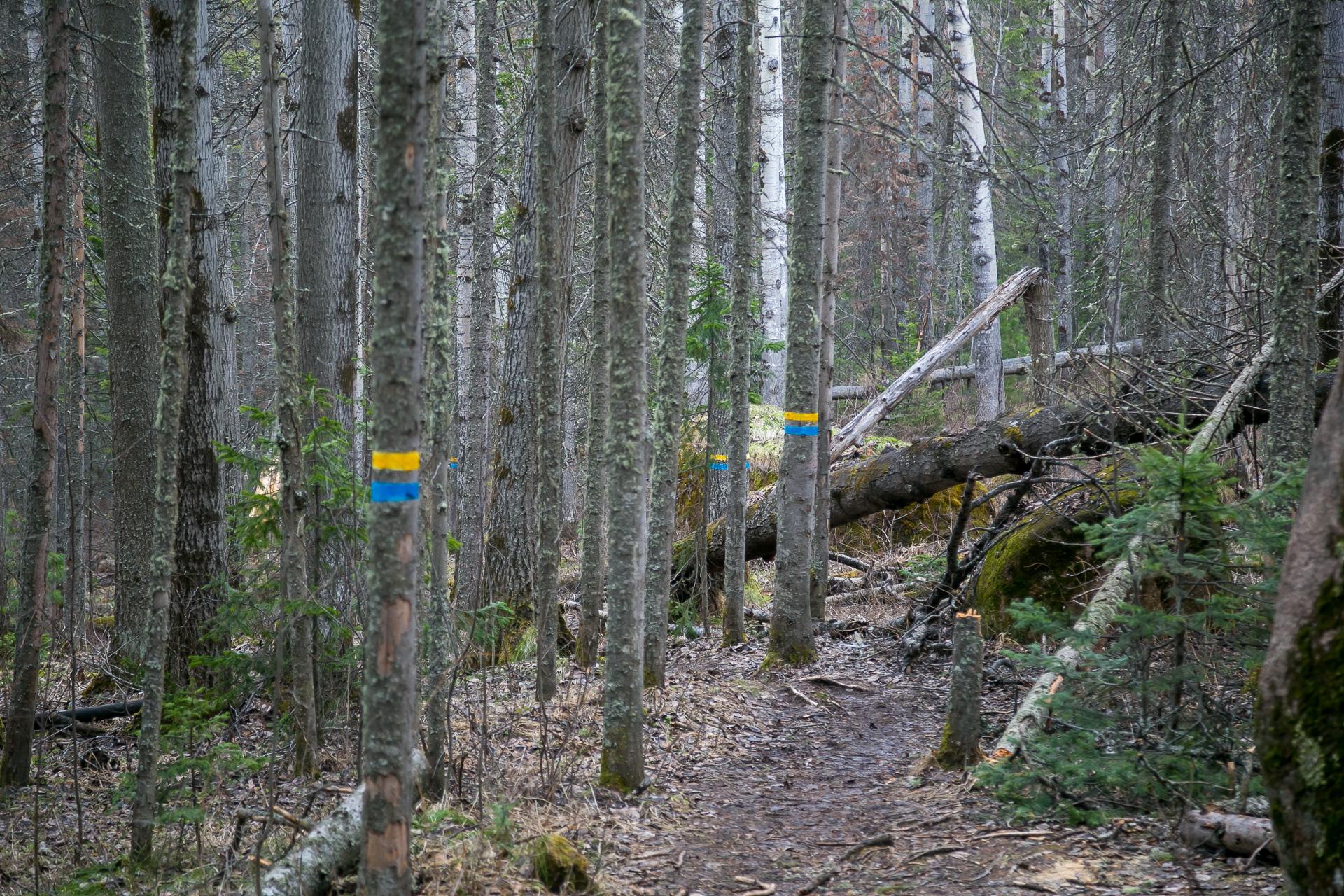 Основные маршруты на «Столбах» помечены метками, по ним можно выйти на основную дорогу. Но для этого стоит заранее поинтересоваться, что эти метки обозначают