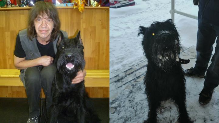 «Он сейчас обросший»: в Архангельске ищут пса погибшего в пожаре жителя «девяностика»