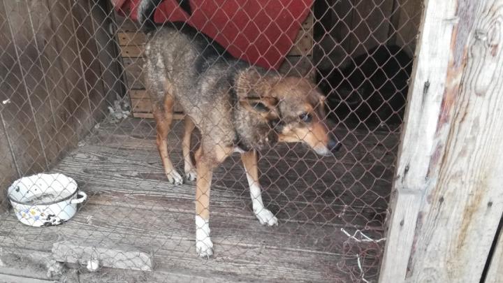 «Куда собаку сдать?» Волонтёры рассказали, откуда на улицах Кургана берутся потеряшки