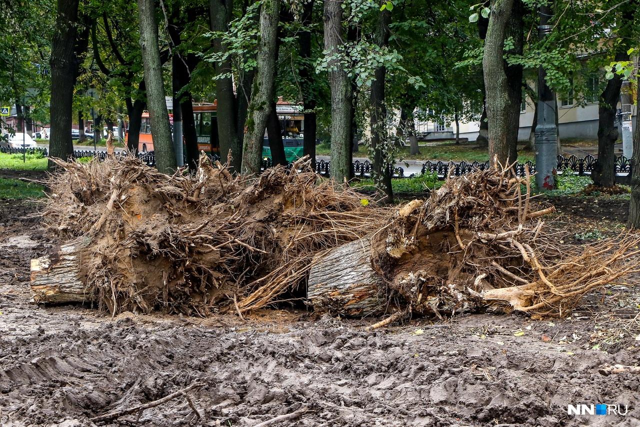 В сквере будут вырублены 54 дерева