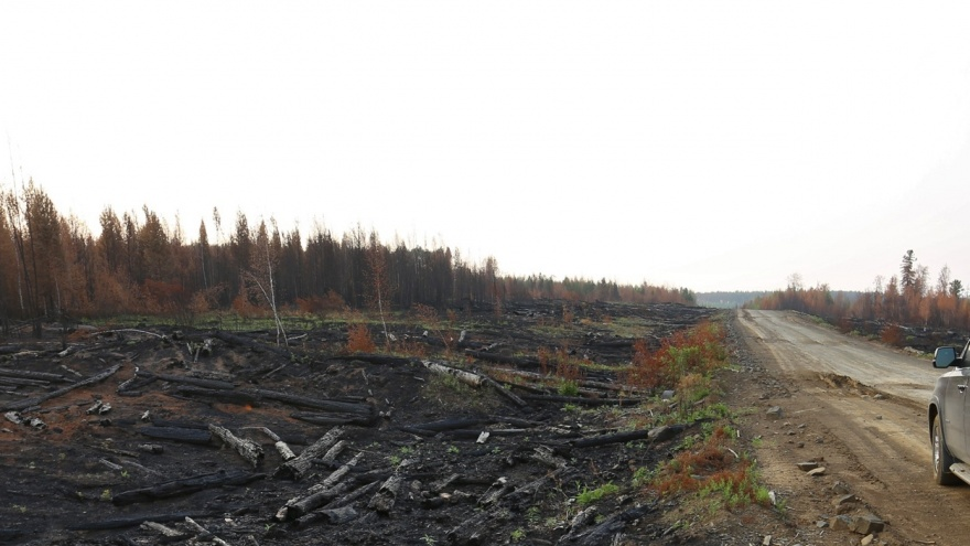 Силовики расследуют, как в крае тушили лесные пожары. Изучаем итоги проверок лесничеств по 2018 году