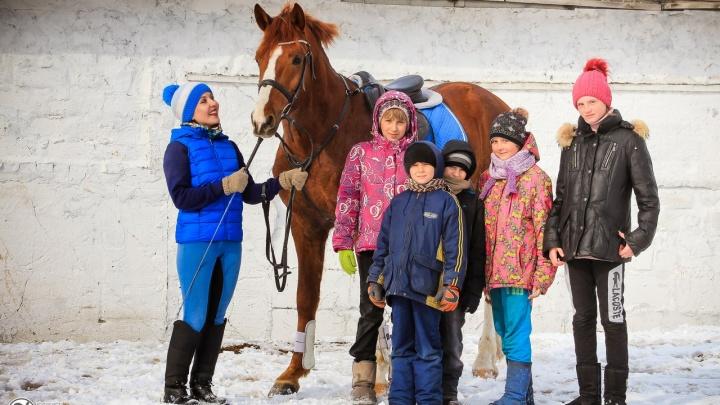 Клуб закрыть, коней — на мясо: родители спасают конный кружок под Новосибирском