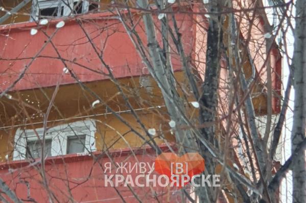 Распустившаяся верба в Дивногорске