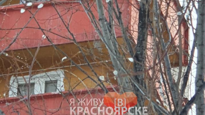 Из-за аномального тепла под Красноярском распустилась верба