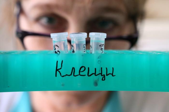 Двое сибиряков доставлены в инфекционную больницу — у одного из них подтвердился клещевой энцефалит