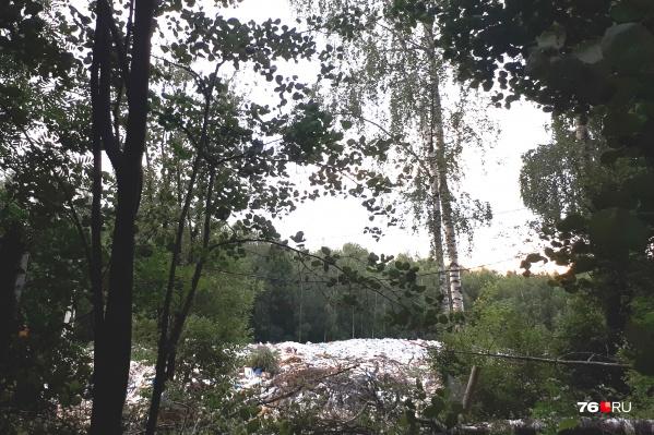Под мусор вырубили огромный участок леса