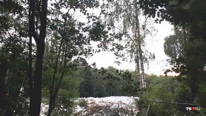 Мусорный полигон посреди леса: москвичка пожаловалась на гигантскую свалку в Ярославской области