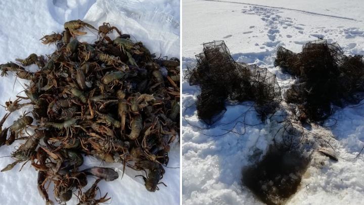 Полицейские поймали браконьеров, которые выловили из Волги 600 раков