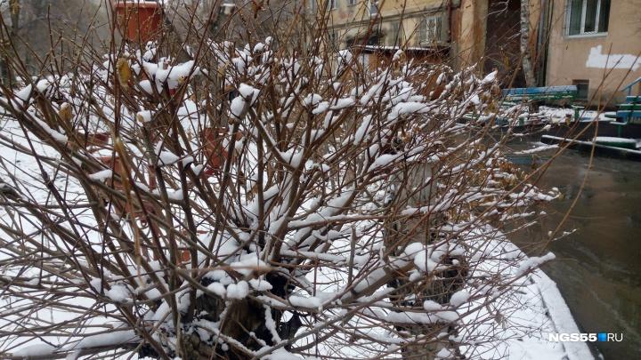 В эти выходные в Омске снова пойдёт снег