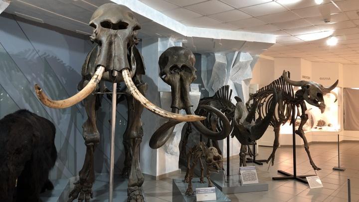 Новосибирцев попросили придумать имя скелету древнего бизона