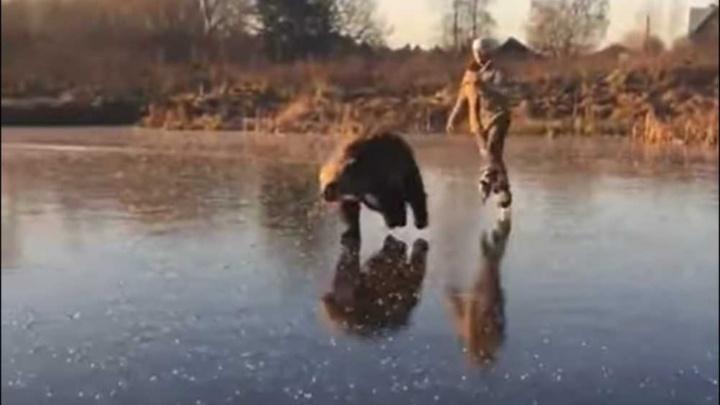Хозяйка медведя Васи из Башкирии, ставшего звездой Сети, рассказала, как ему живется в «Доме волка»