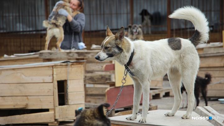 Фоторепортаж из омской службы отлова собак, какой её хотели показать журналистам