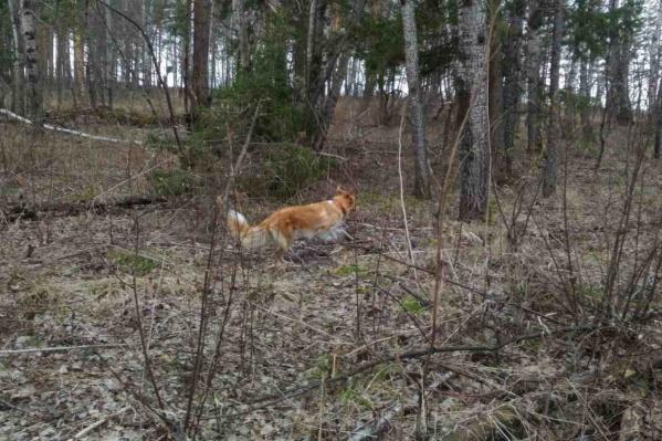 Женщина пропала в лесу посёлка Маганск