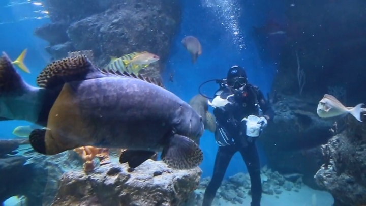 «У рыб тоже должен быть праздник»: в дельфинарии акул и скатов накормили блинами из кальмаров
