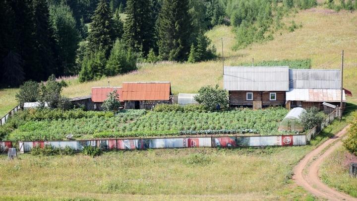 Пермские многодетные семьи смогут получить 250 тысяч рублей вместо земельного участка