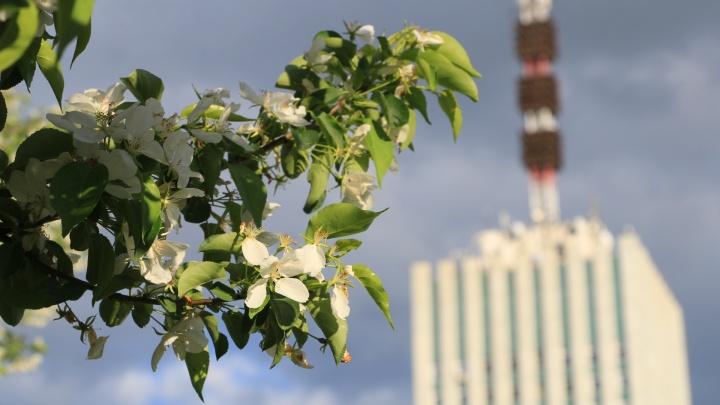 «Никаких катастроф»: до конца недели в Архангельске будет тепло, но не без осадков