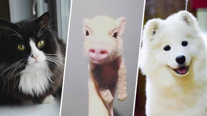 Быть пушистым и популярным: топ-10 инстаграмов Поморья, в которых главные — домашние животные