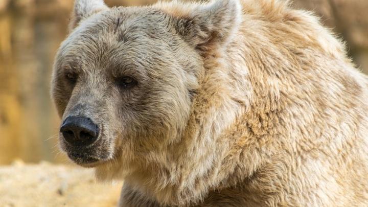 Канадский защитник «Барыса»: «За три дня в Новосибирске я не встретил ни одного медведя»
