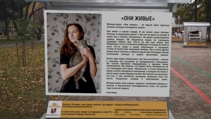 Истории о котиках. В Перми откроется фотовыставка о бездомных животных