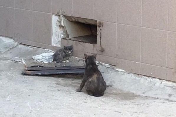 Спасли замурованных котят несколько молодых людей