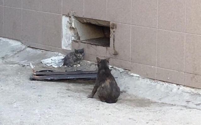 В Самаре освободили замурованных в подвале котят