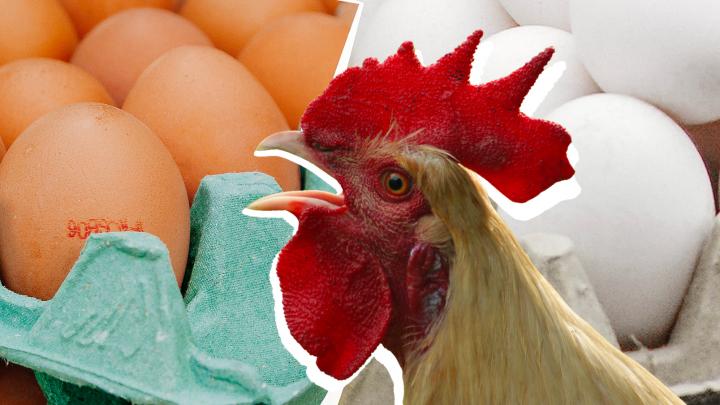 Почему от желтка толстеют? Разбиваем 9 мифов о яйцах