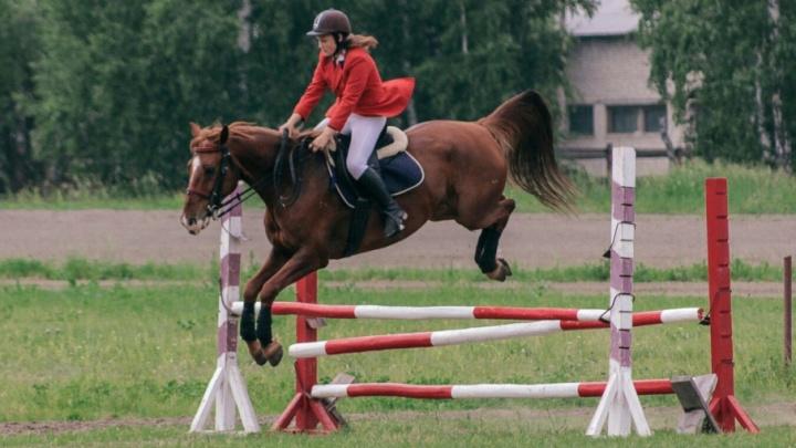 Детей покатают на пони, а взрослые поборются за Кубок губернатора