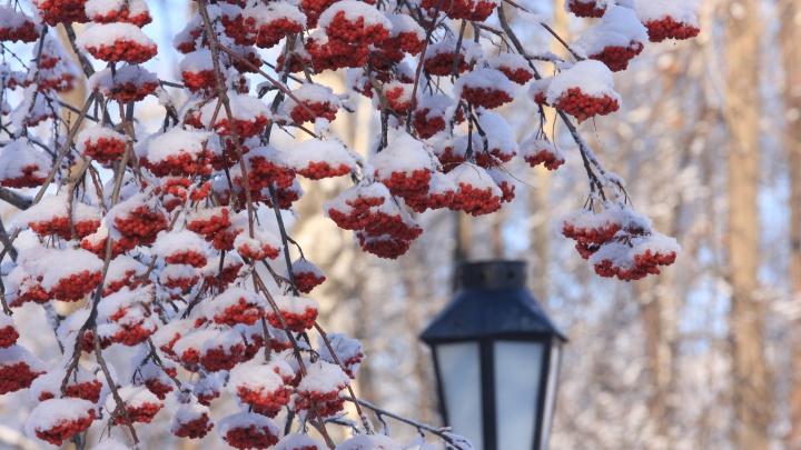 Потеплеет, но потом: синоптики предупредили о продолжении морозов с ветром