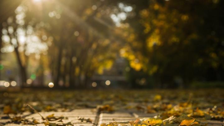 Солнечно и без дождей: какая погода ждет ростовчан в ближайшие дни