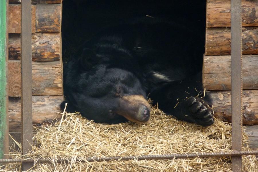 Медведи вБольшереченском зоопарке неспешат впадать вспячку