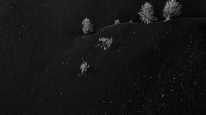 Берёзы на мёртвой горе: снимок южноуральской природы получил награду от National Geographic