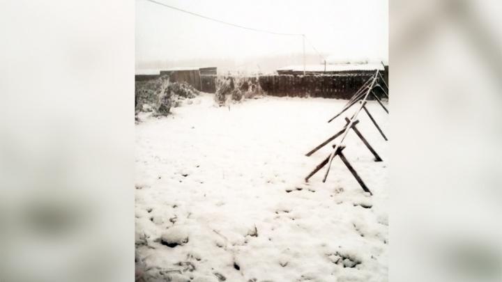 «Валит крупными хлопьями»: юг Новосибирской области засыпало снегом