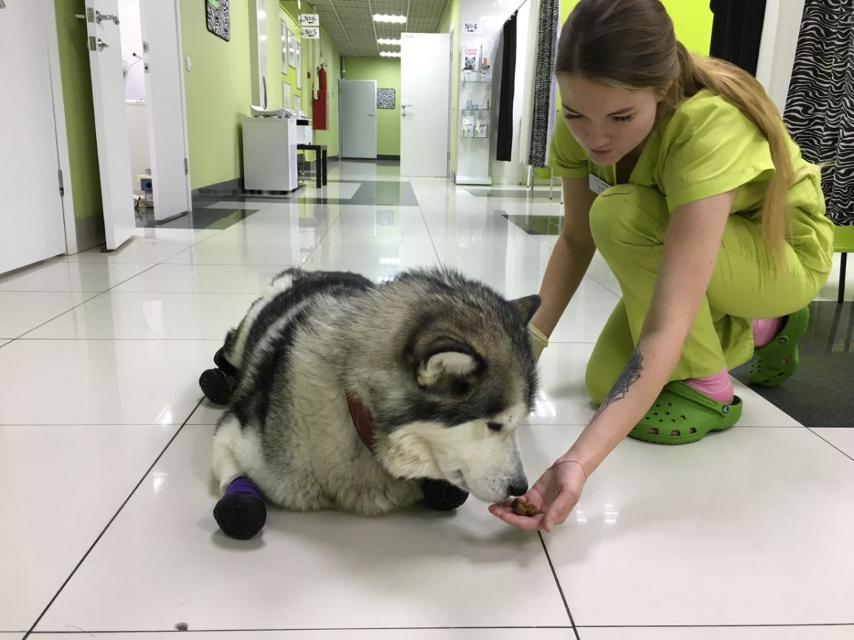 После операции Рута на удивление врачей быстро пошла на поправку