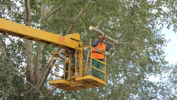 В Уфе началась массовая обрезка деревьев
