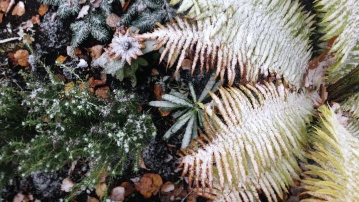 Зима ошиблась месяцем: в Екатеринбурге 1 октября выпал первый снег