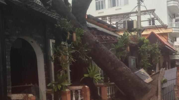 Вырванные деревья и разорённые пляжи: екатеринбурженка поделилась фото Нячанга после мощного тайфуна