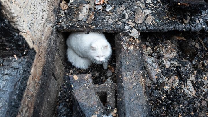 Мать была на работе: в Волгоградской области при пожаре сгорел двухлетний ребенок
