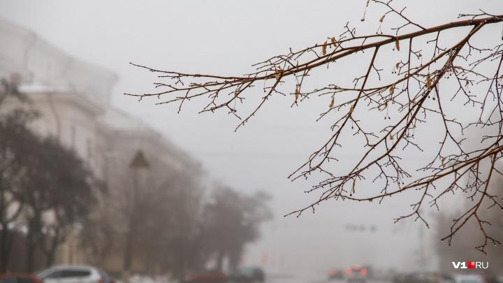 Весна еще и не снилась: Волгоградскую область после весенних «каникул» проморозит до -16