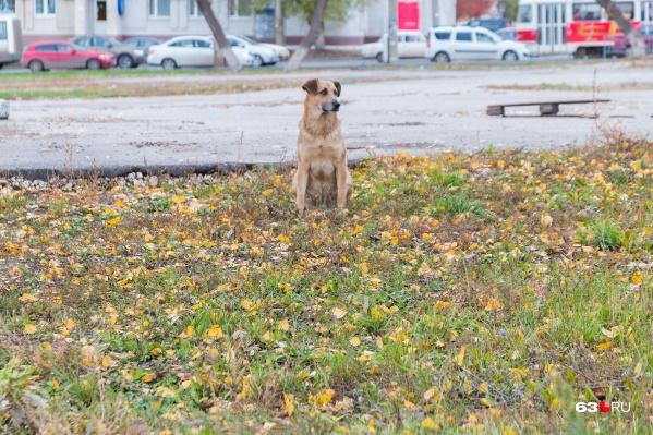 До конца года в Самаре хотят отловить2840 бездомных собак