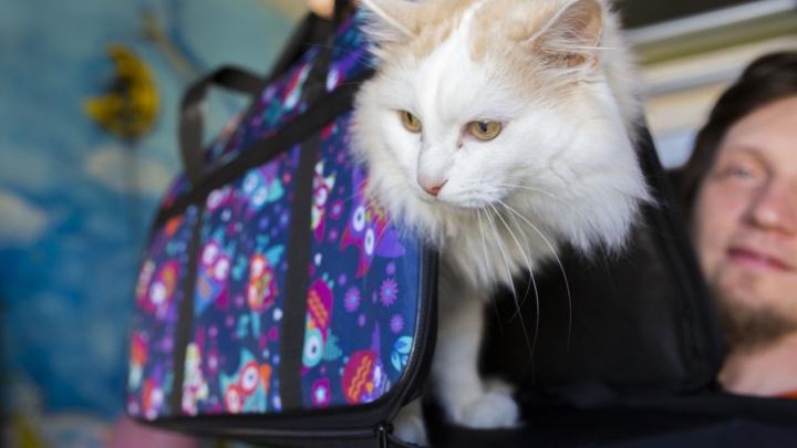Минтранс решил пересмотреть правила авиаперевозки животных после истории с толстым котиком