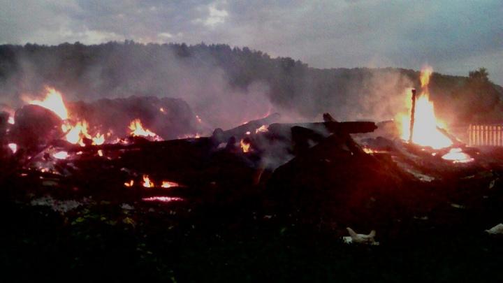 В Башкирии сгорели 250 цыплят