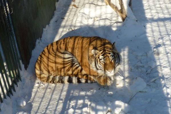 Бойкая Таисия сонно смотрит на фотографа — доброе морозное утро наступило