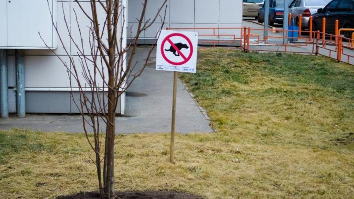 От чиновников Красноярска потребовали разработать условия размещения площадок для выгула собак
