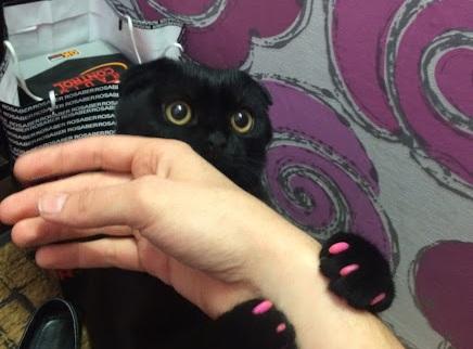 Ветеринары спасли жизнь кошке, которая проглотила рублевую монету