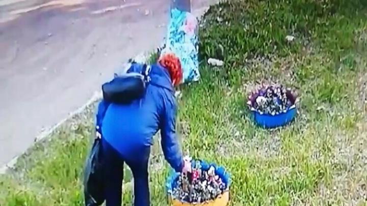 Дерзкое ограбление: на видео попало, как женщина рвет саженцы с городской клумбы в Нижегородке