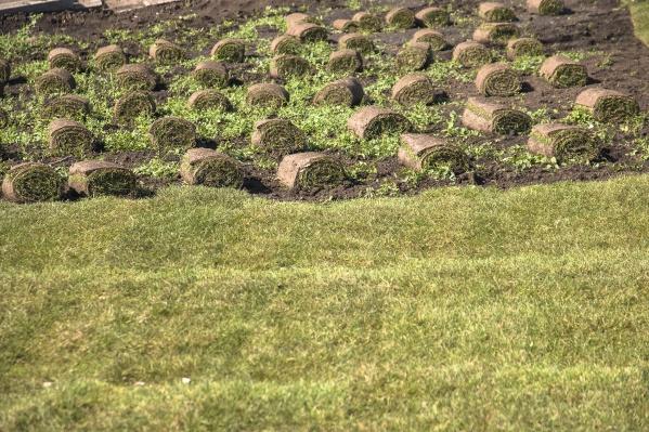 От растений очистили два гектара полей