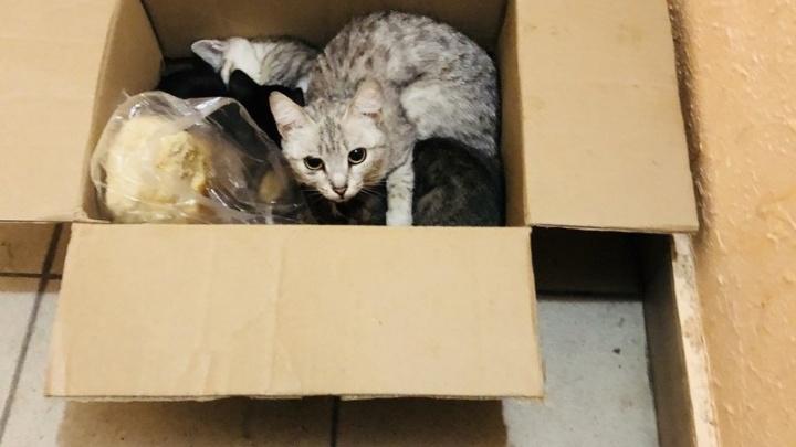 Зоозащитники жалуются на тюменцев, выбрасывающих беременных кошек и котят: почему так происходит и как помочь