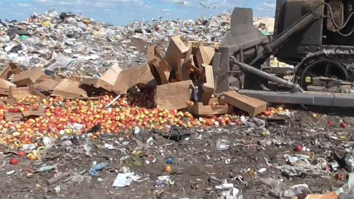 В Кургане на свалку отправили 1,5 тонны яблок